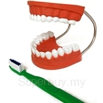 USL Giant Dental Care Model with Toothbrush - ETH001