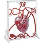 USL Pumping Heart - EMK019